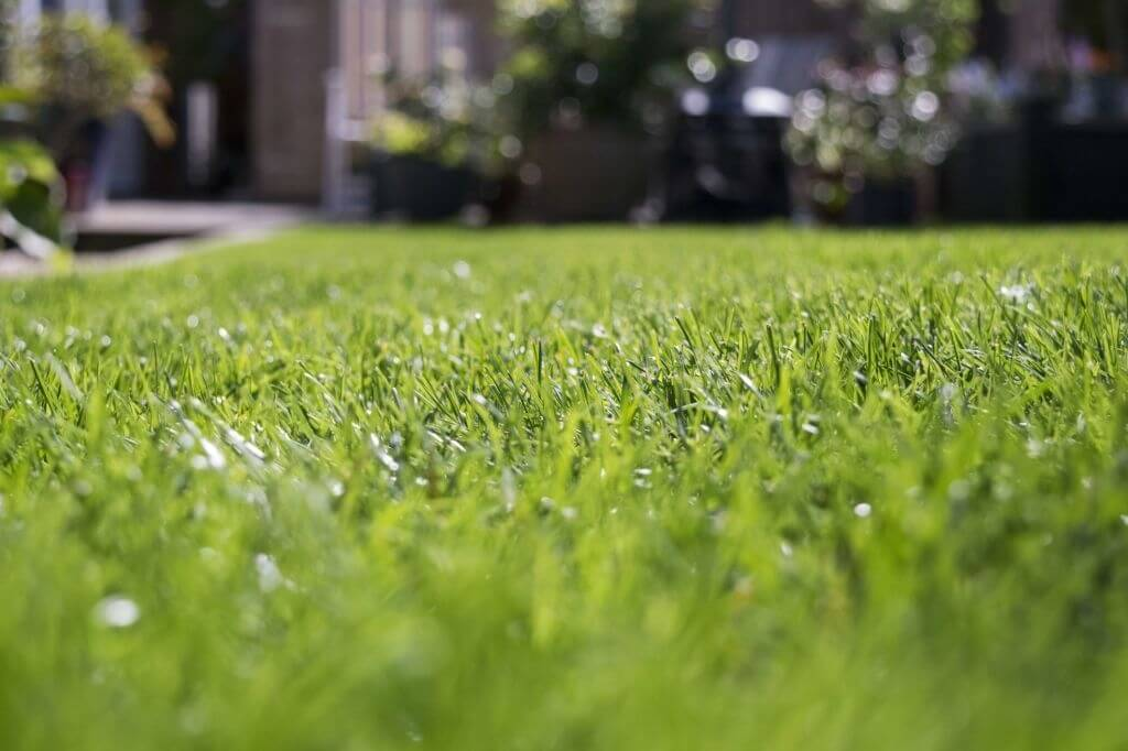 How long should I wait to mow the grass after it rains