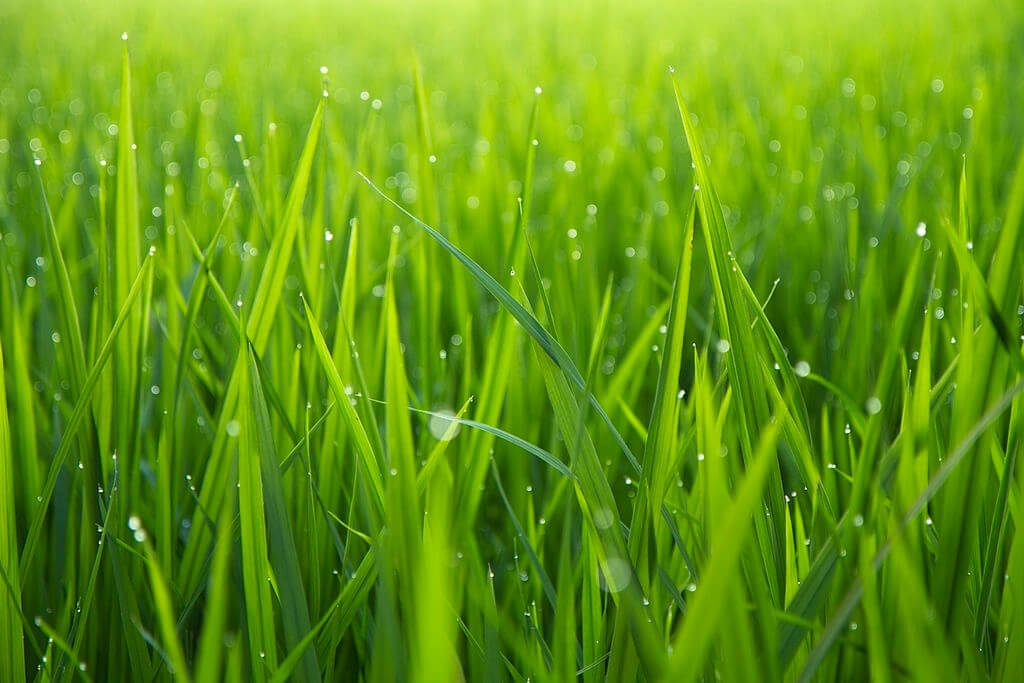 Why should you not cut grass when it's wet